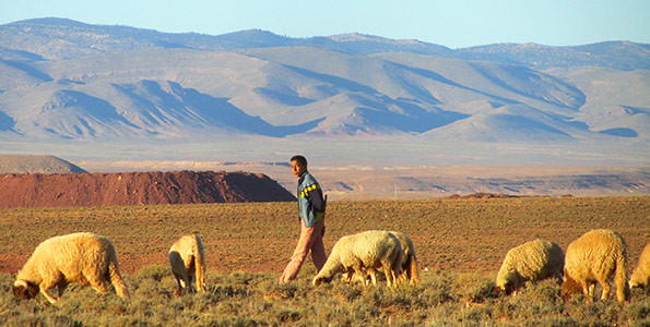 Young nomad herder with his sheep grazing on a typical pasture in Midelt Province, Morocco (Photo: Sebastian Mengel)