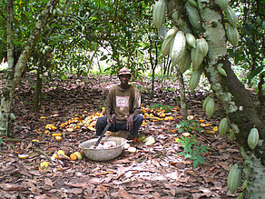 Laborer working on a Cocoa Farm in Sewum, Western Region, Ghana