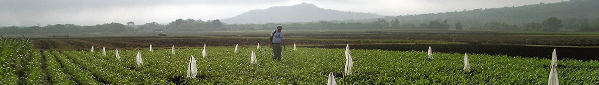 Experimental maize field at the CIMMYT Station in Agua Fría near Poza Rica, State of Veracruz, Mexico (Photo: Marco D'Alessandro)